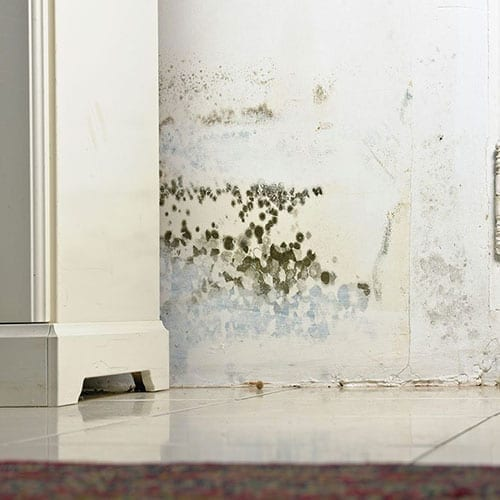 Mold removal and remediation in Durham NC