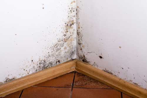 Mold Removal Experts in Knightdale NC mold damage restoration services