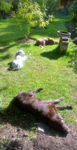 """Chocolate, Torgar (""""Spot"""" in Quechua) and a very old Great Dane/St. Bernard mix outside our front door in the morning"""