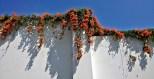 Barranco wall