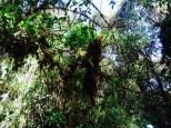 Jungle foliage at Llactapata Pass.