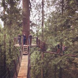 Treetop explorations
