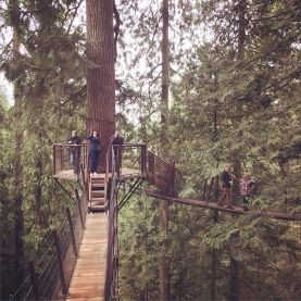 Treetop explorations