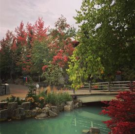 Whistler's fall colors are coming out.