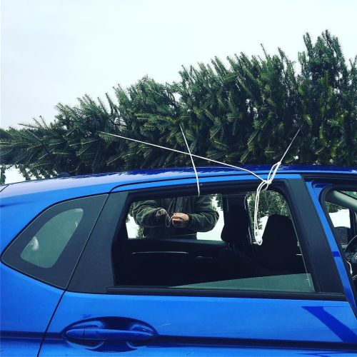 Tree acquired!