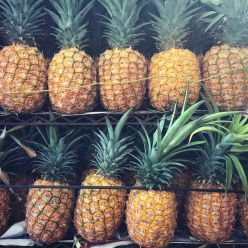 Pineapple country.