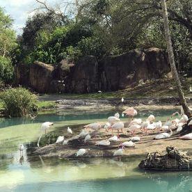 A flamboyance of flamingos.