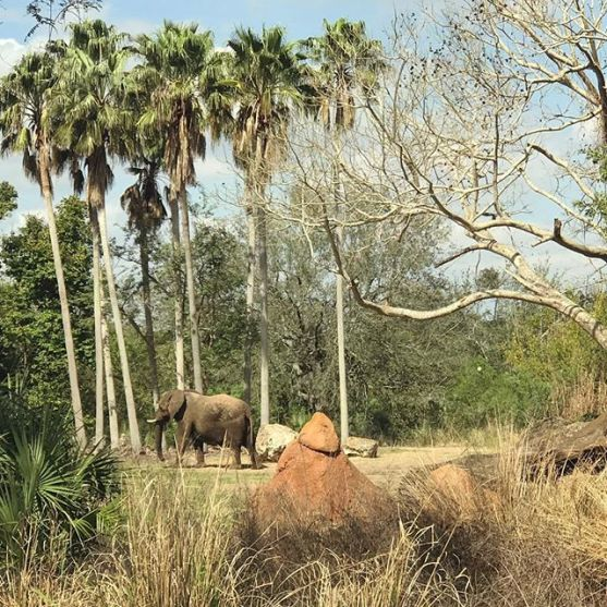 Elephant!!!