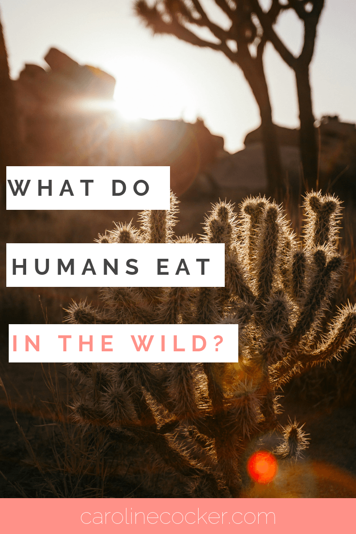 what humans eat
