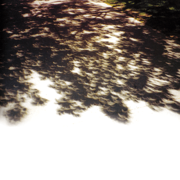 tree-eclipse