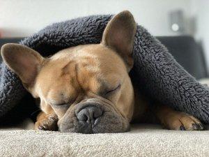 Snuggle sleeping dog