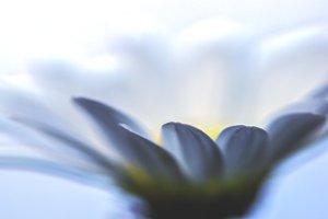 flower love inside us