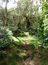 forêt luxuriante