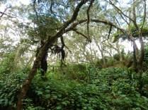 végétation des hauts