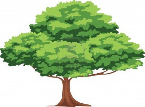 16500454-tree-vector final major