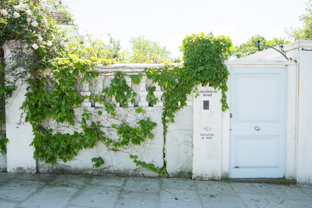 A worn white wall covered in ivy with a pastel blue door