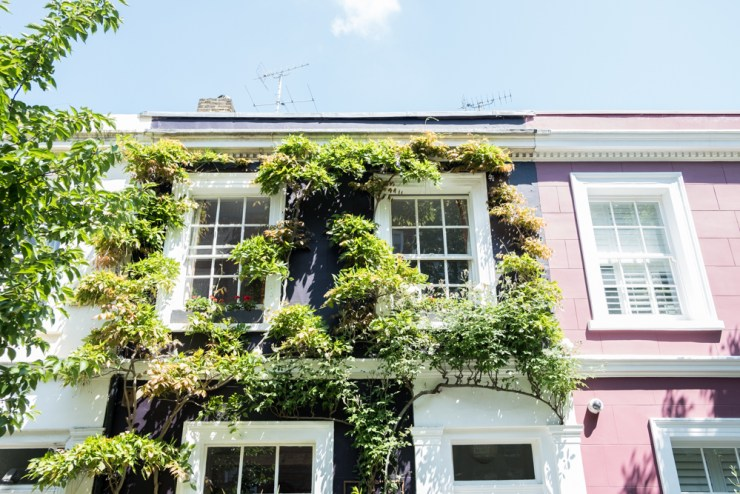 A purple house covered in ivy and greenery