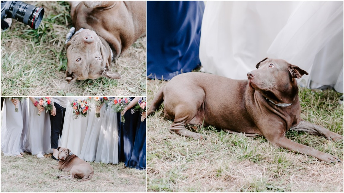 Adorable dog at a wedding in Hamsphire