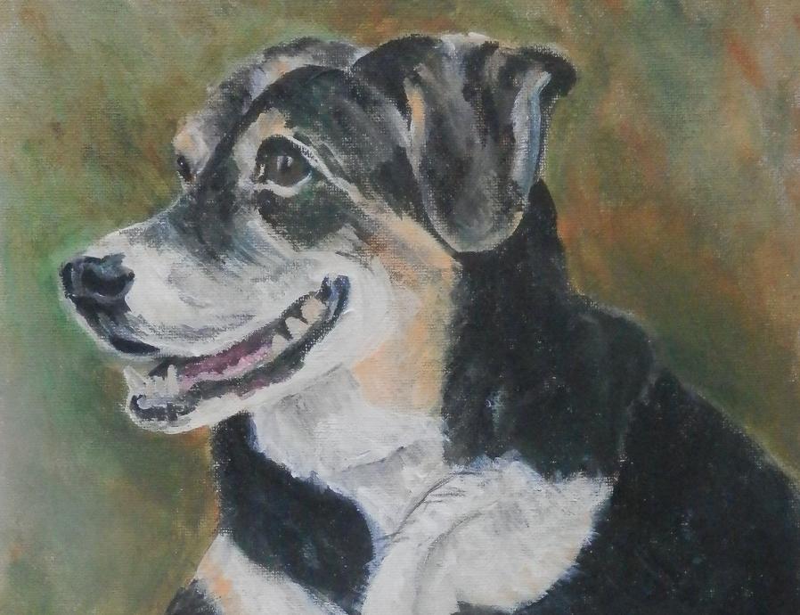 Entlebucher Mountain Dog, mountain dog painting, pet portrait