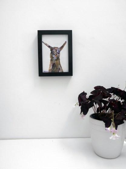 small framed llama painting, llama art, colourful farm animal art, unique llama painting