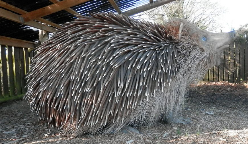hedgehog, British Wildlife Centre, animal
