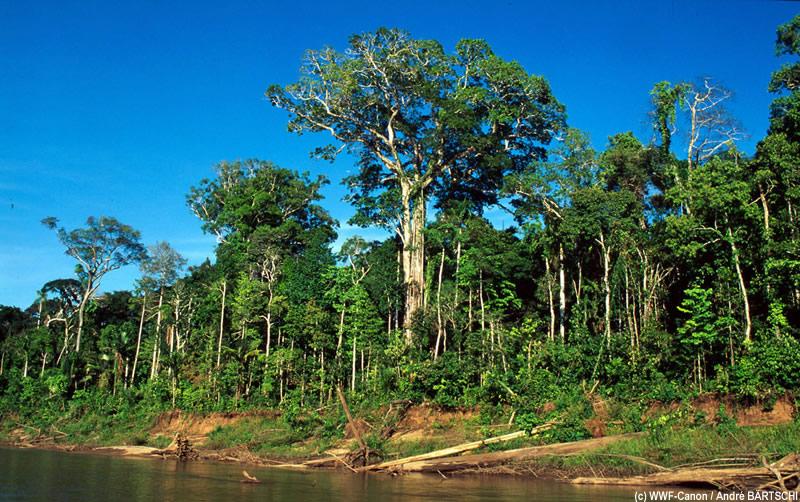 Amazonie en danger (5/6)