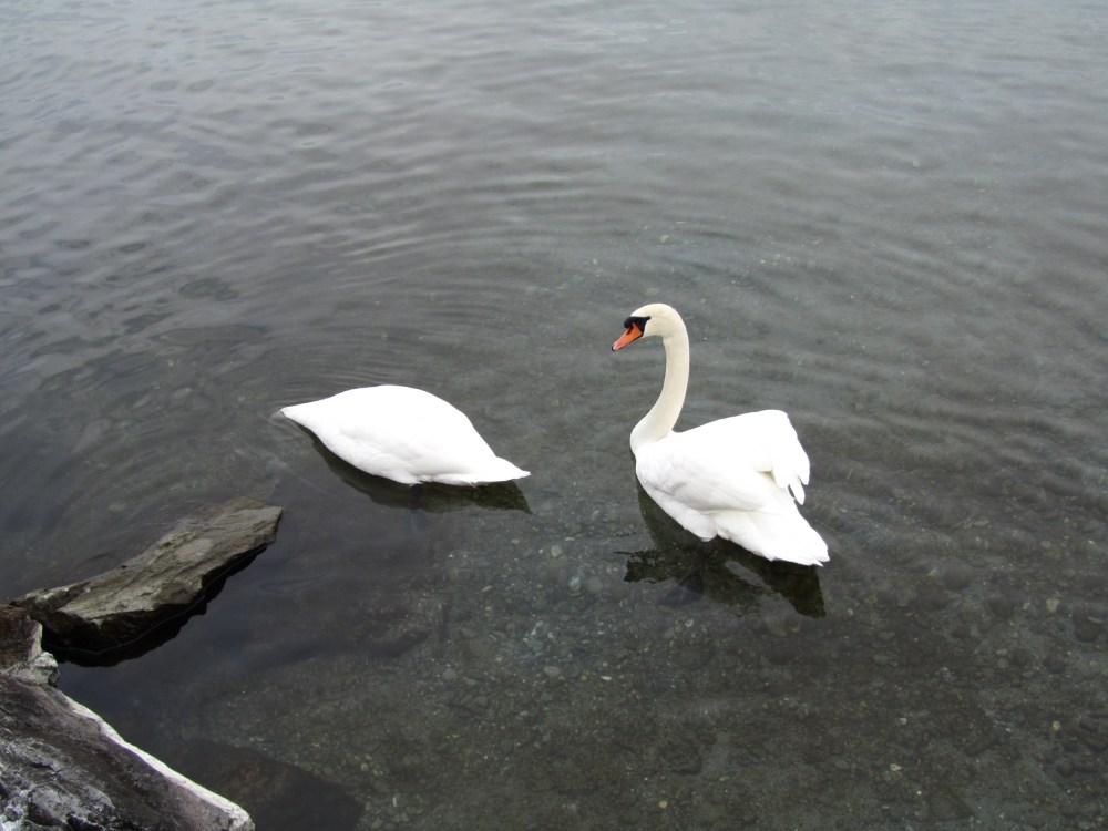Recencement des oiseaux d'eau hivernants (3/6)