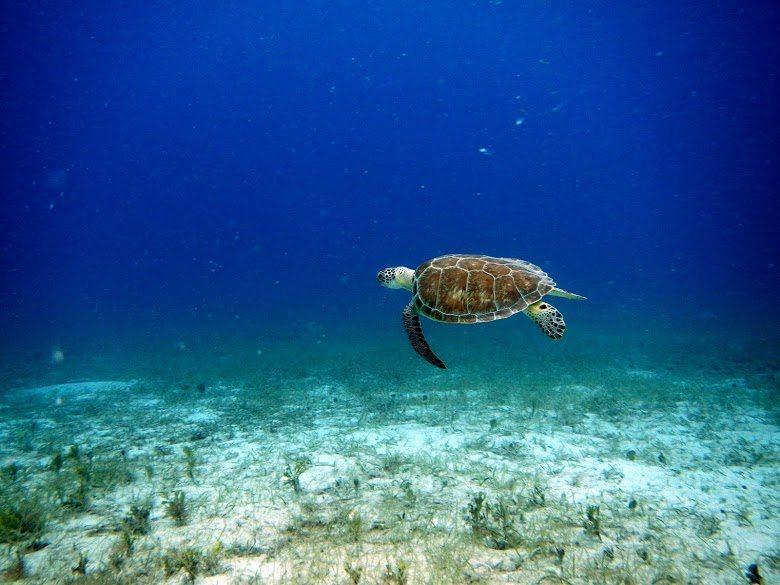 Dive Snorkel and Fishing in Virgin Islands