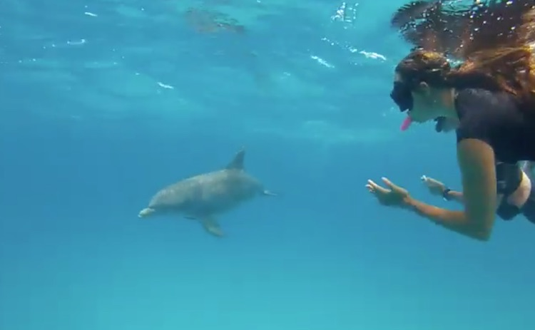 Dolphin and SCUBA diver underwater off the S-Y LOLALITA