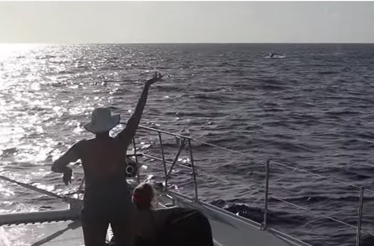 Passenger on sailing yacht LOLALITA sees a whale in the Turks and Caicos.