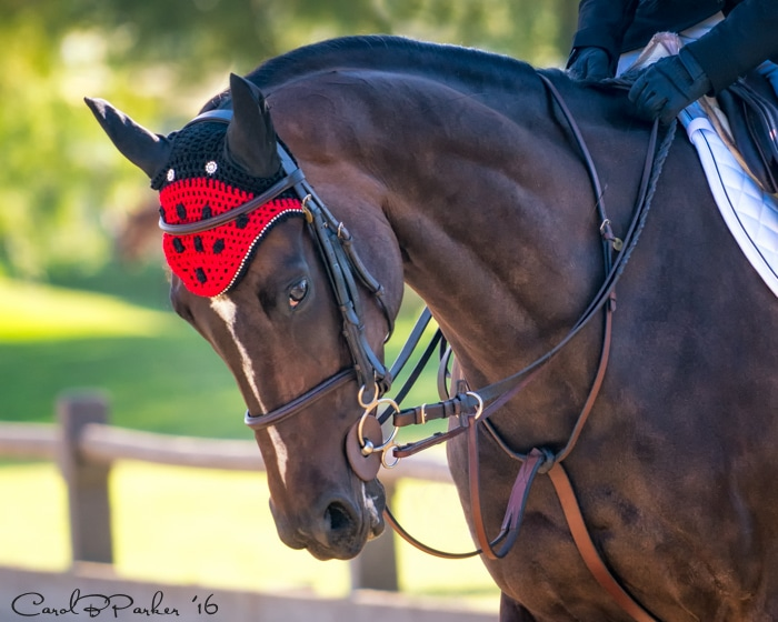 Portrait of a Thoroughbred - San Juan Capistrano, California 2016