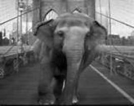 Elephant walking across bridge