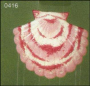 Scioto 0416 SEASHELL WIND CHIME (large shell shown) Price $5.00