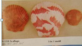 BYRON 1218 scallops (shells)