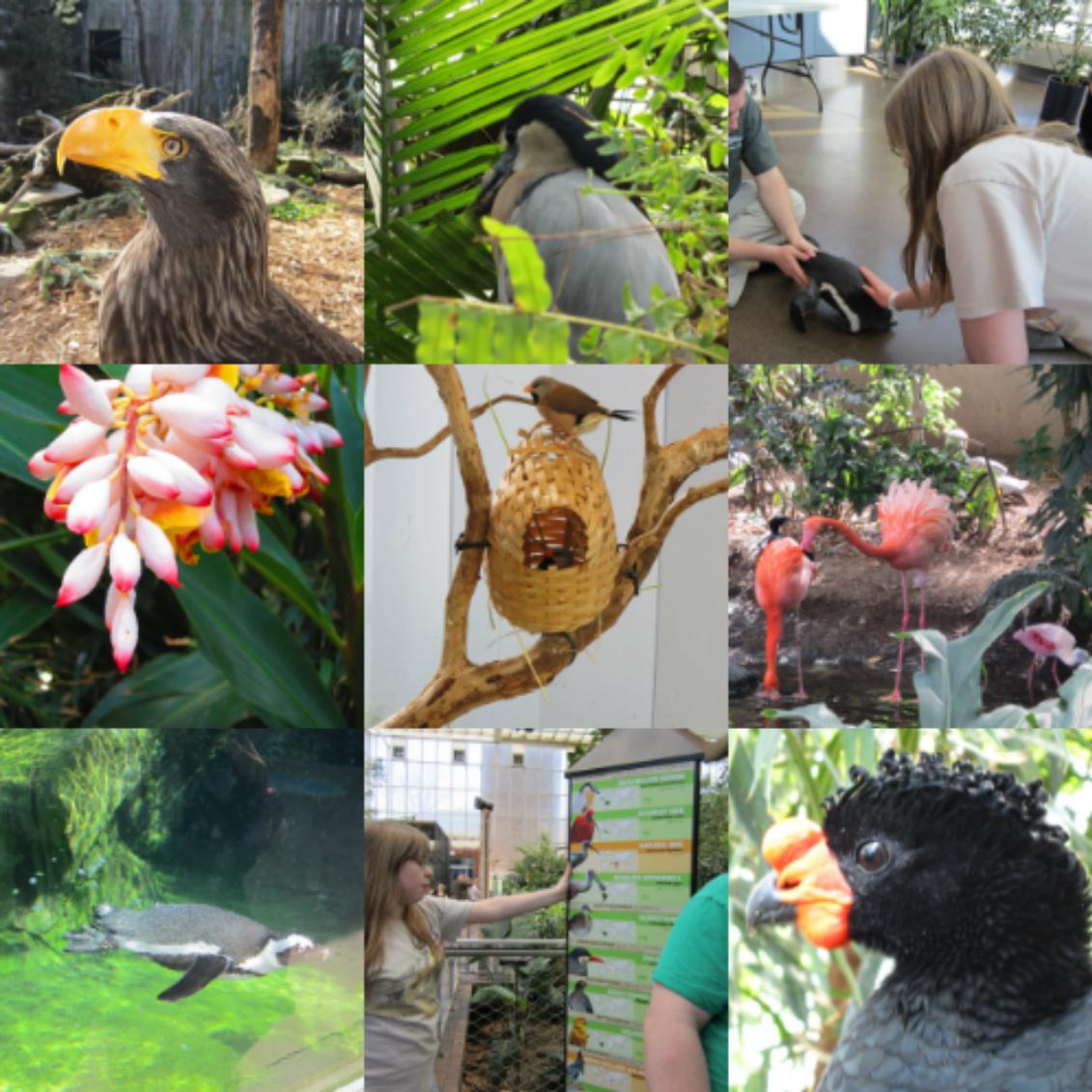 Wordless Wednesday: Pittsburgh's National Aviary