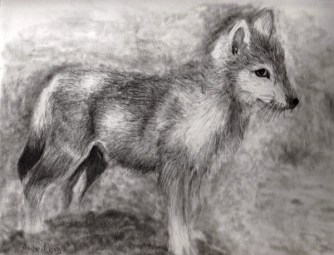 wolf drawing 2