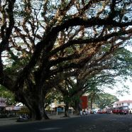 My father's boyhood Banyan