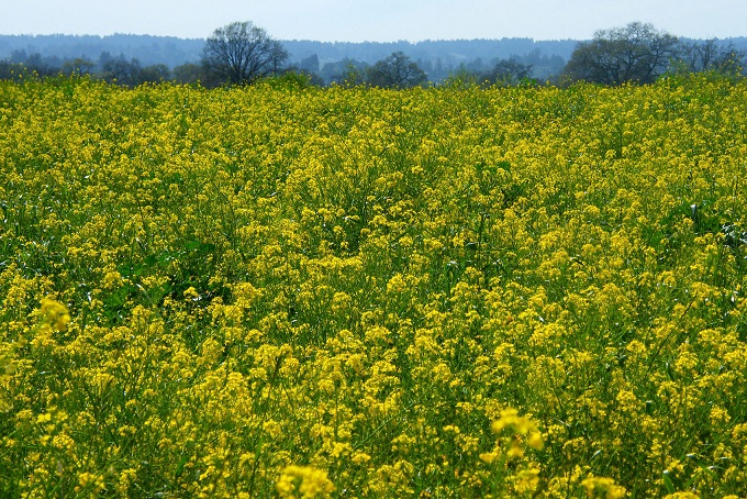 Lessons From The Holocaust For Our Times, Part 4: A Tale Of Two Mustard Seeds, By Dianne Monroe