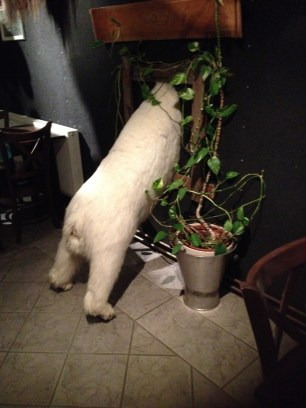 The bear at Mary-Ann's
