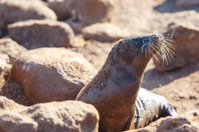 CLP_sea_lion_rocks
