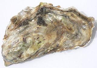 Calcarea Carbonica