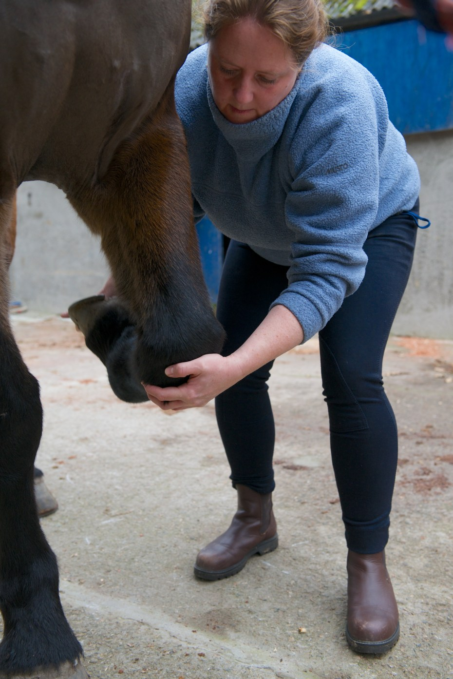 equine osteopathy 017