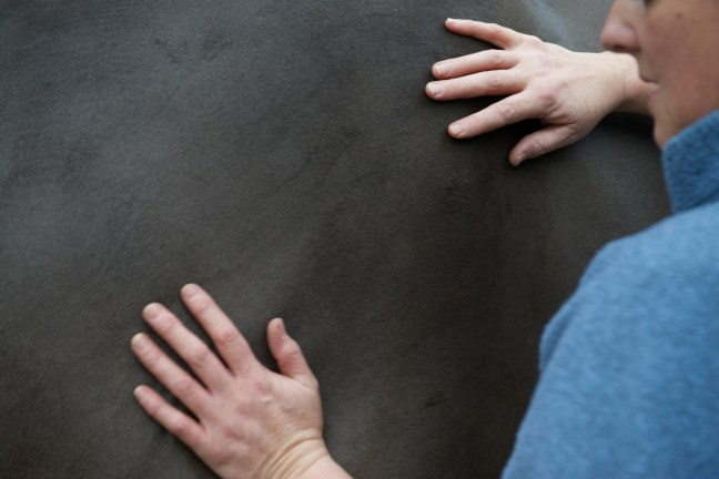 equine osteopathy 052