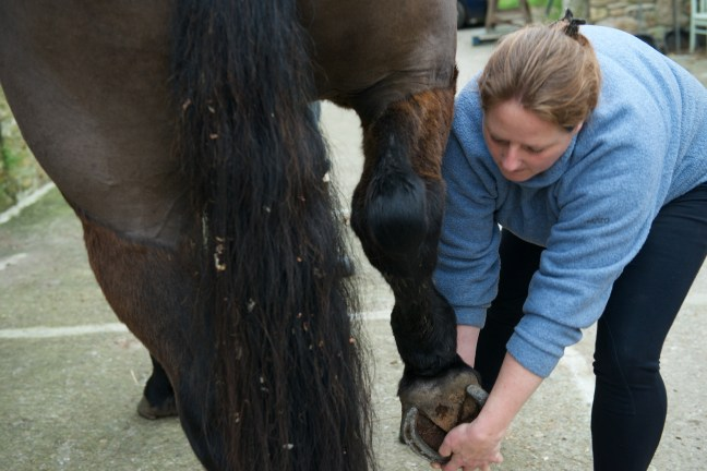 equine osteopathy 054