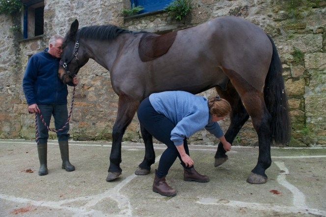 equine osteopathy 062