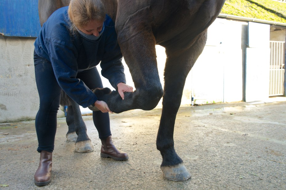 equine osteopathy 132