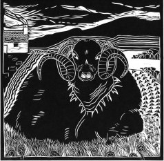 Image of a linocut by artist Carolyn Murphy, called 'Scottish Sheep'
