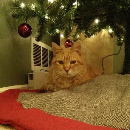 Chester might like the tree...we're not sure.