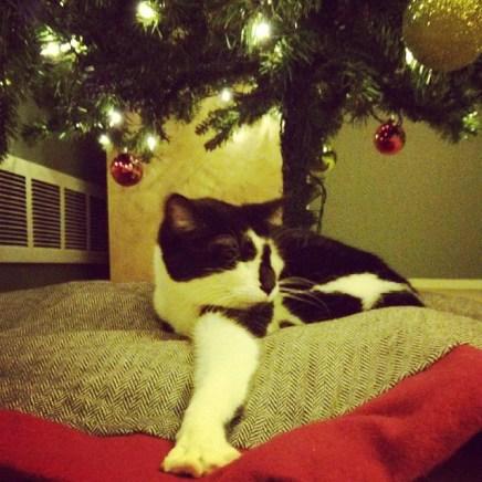 Roxy loves the new tree.