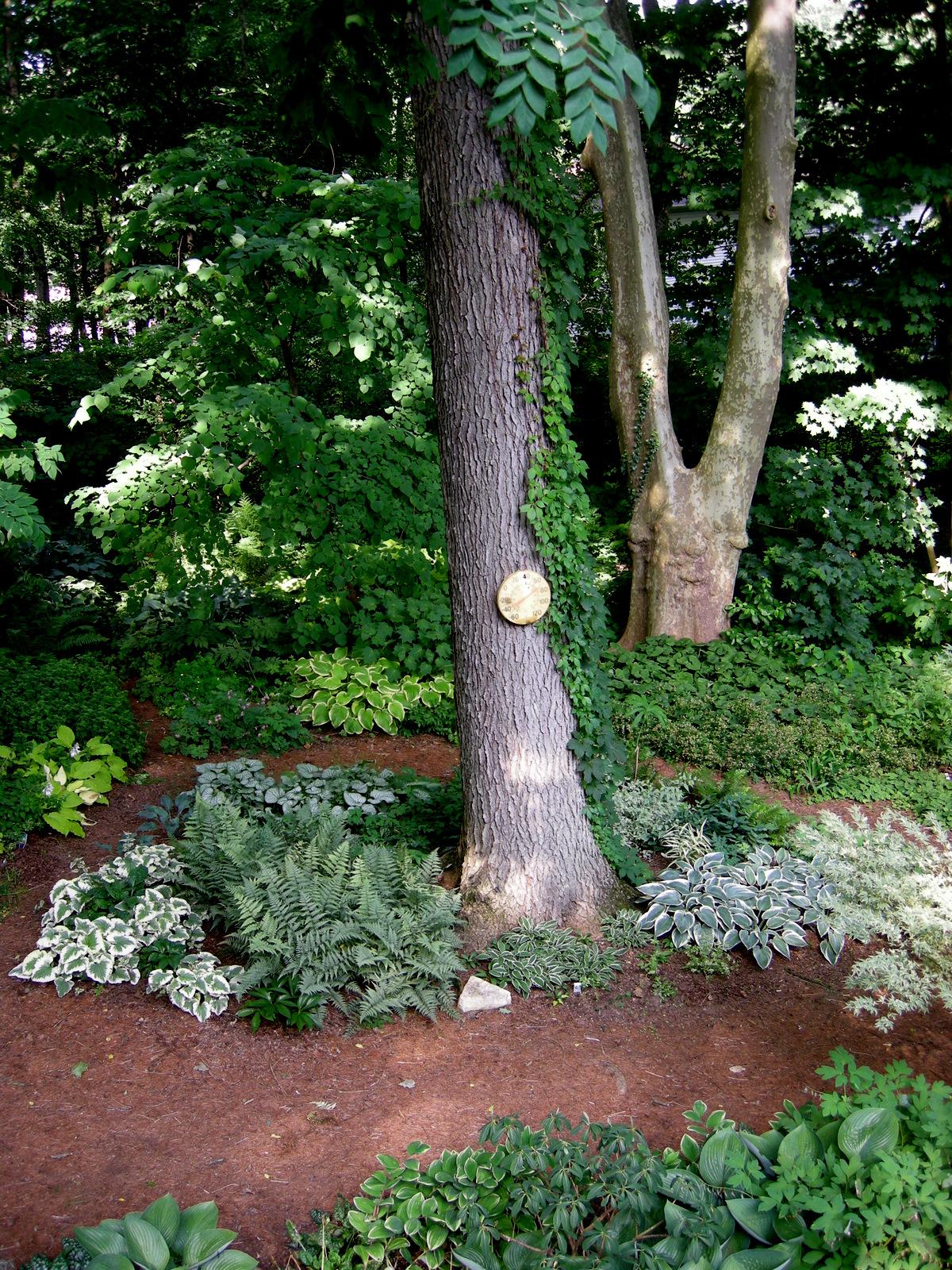 Tiarella cordifolia a way to garden -  Brunnera Dawsons White